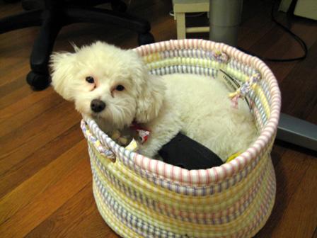Puppy_moodboard 005